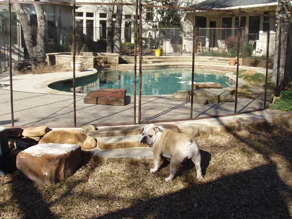 temporary-fencing-for-dogs