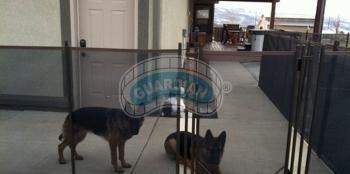 dog-barrier.jpg