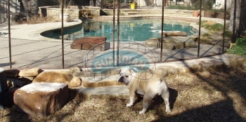 pet-pool-fence.jpg
