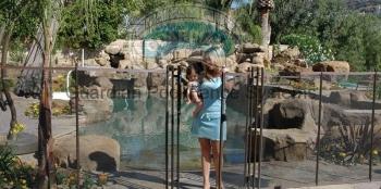 Pool-Fence-Premier-Gate.jpg