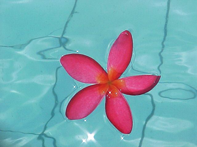 environmental eco friendly pool