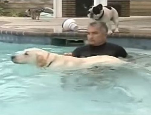 Teach Your Dog To Swim