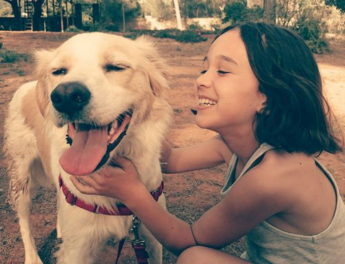 You and Your Pet, Keeping Each Other Happy and Healthy