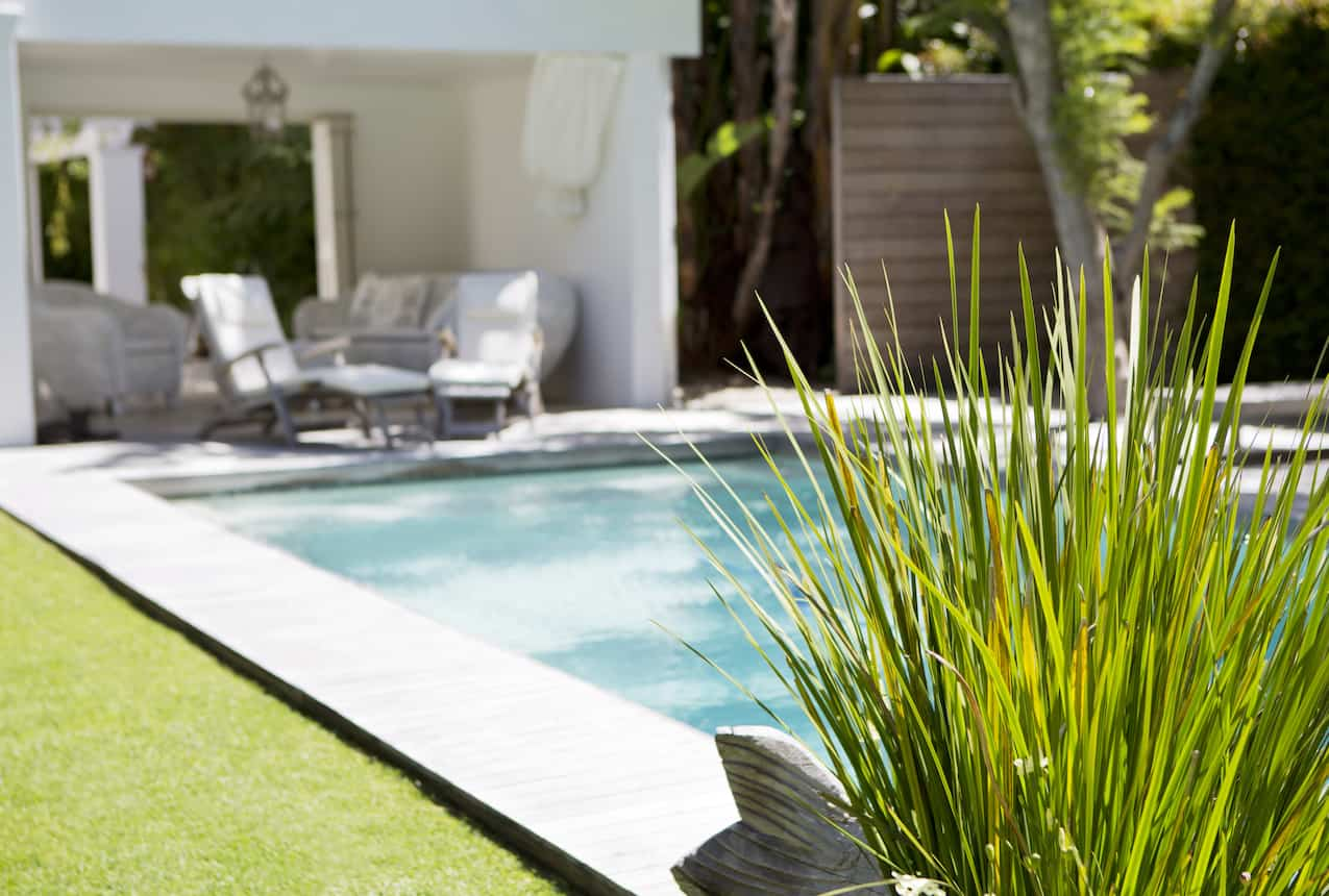 Plant and swimming pool in backyard
